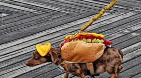Hamburger-Hot dog-Pastrami, la sacra trinità del pret a manger newyorchese