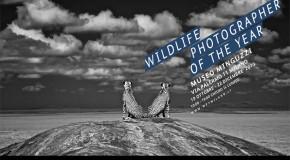 MILANO. Wildlife Photographer of The Year, la natura in 100 scatti