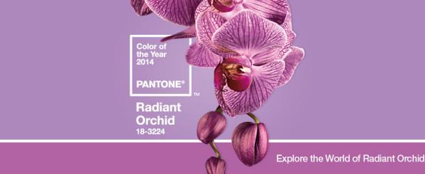 Tendenze, Radiant Orchid è il colore dell'anno