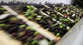 """Agricoltura, Dipasquale (Pd): """"Sicilia non paghi da sola prezzo accordo UE-Tunisia su olio d'oliva"""""""