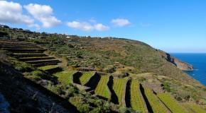 """Pantelleria tra le migliori destinazioni di  """"Turismo del Vino"""" per PaesiOnLine.it"""