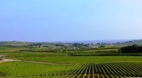 Vinitaly, dieci vitigni antichi siciliani verranno iscritti al Ministero delle Politiche Agricole