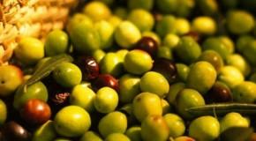 Agroalimentare, quale futuro per l'olivicoltura?