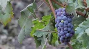 Testo unico sul vino, occorre approvazione veloce