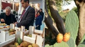 Expo 2015, colazione a base di Ficodindia di Sicilia al Cluster BioMed