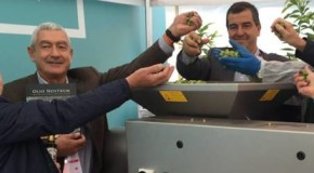 Olio extra vergine d'oliva siciliano, grandi affari all'Expo 2015