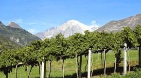 Vino, Cantine Aperte: la più alta sul Monte Bianco a 2.100 metri