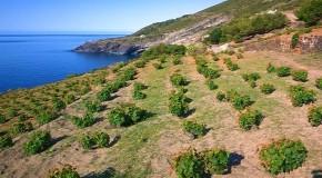Pantelleria diventa Parco Nazionale, il primo in Sicilia