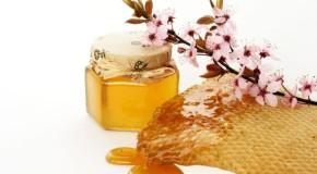 Miele, Cia: crolla produzione in Italia, apicoltori in difficoltà