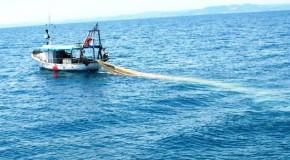 Pesca: pubblicato bando da 8 milioni per trasformazione e acquacoltura