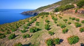 Vino, al via a Pantelleria Enosimposio 2016