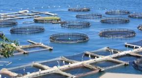 Pesca: Bando da 16 milioni per l'acquacoltura
