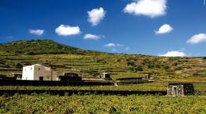 """Pantelleria, Antonio Rallo: """"La viticoltura eroica ci ripaga con vini unici"""""""