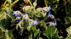 Agrigento, alla scoperta delle erbe aromatiche