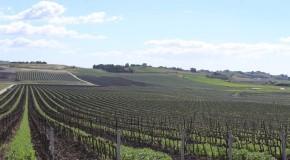 """Vini, il biologico per Milazzo è """"una scelta culturale"""""""