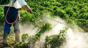 Torna la Settimana internazionale contro i pesticidi