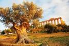 La Sicilia delle eccellenze decolla con Meridiana