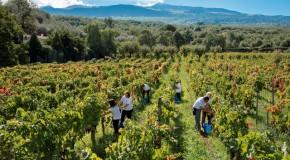 La Sicilia della bellezza e del vino, i Georgofili a Donnafugata