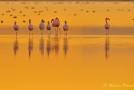 Priolo: una passeggiata tra i fenicotteri