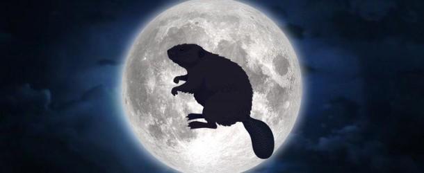 """Weekend: arriva la """"Luna piena del castoro"""""""